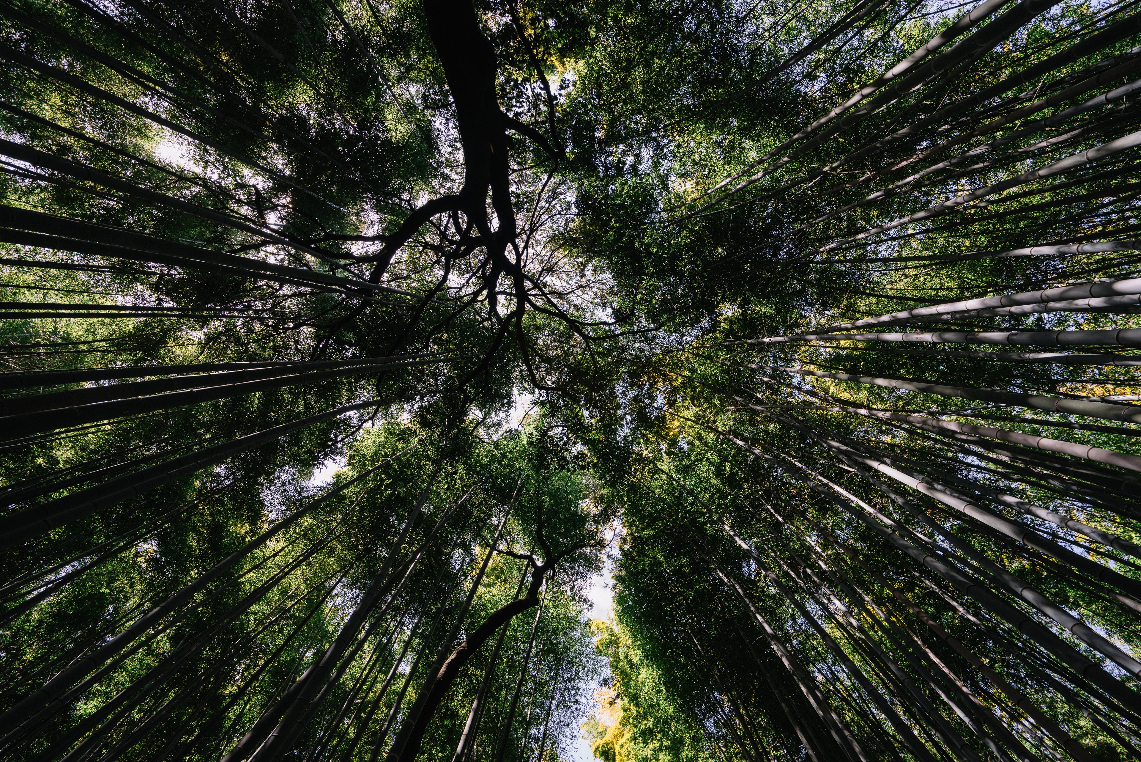 japan-nature01