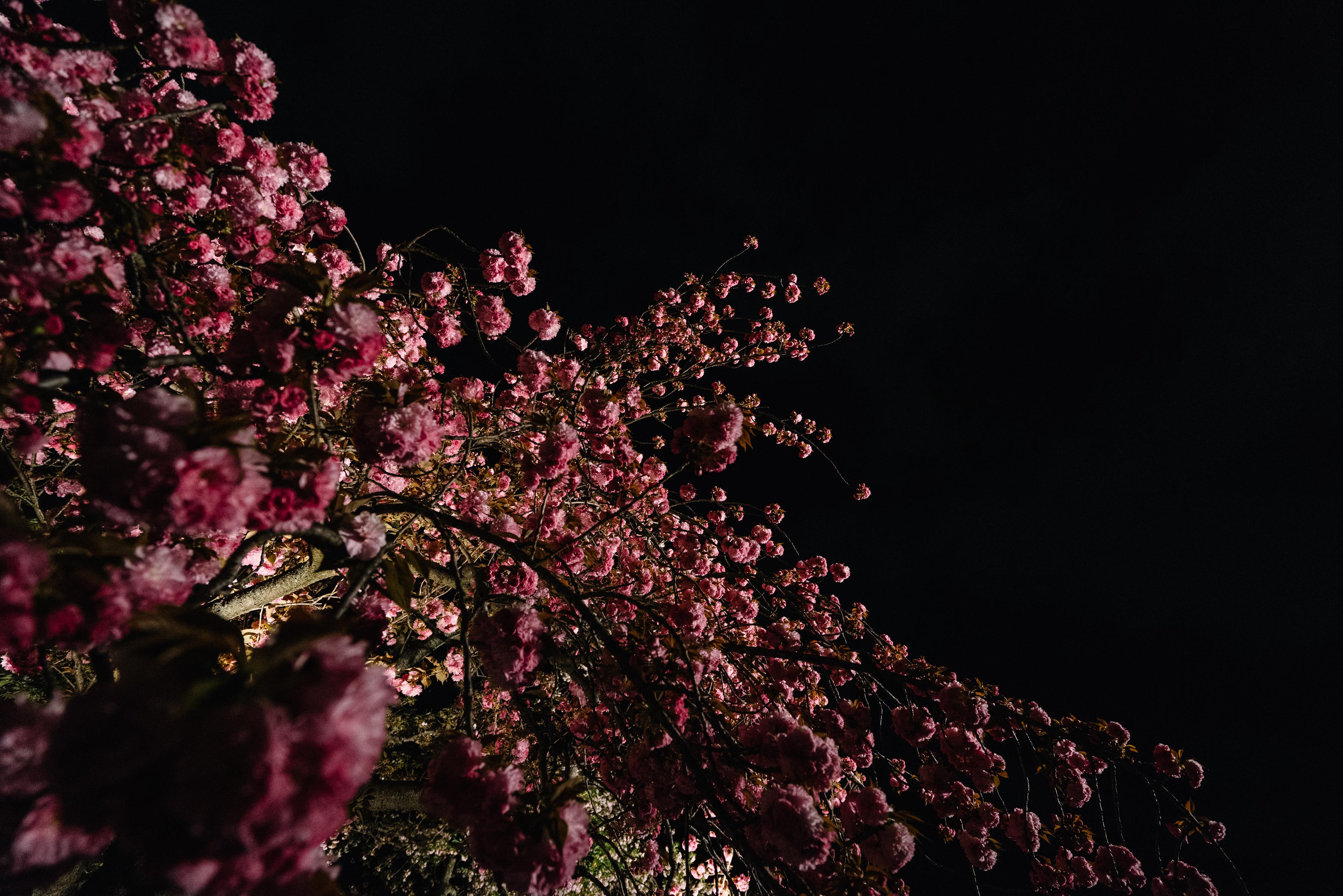 japan-nature05