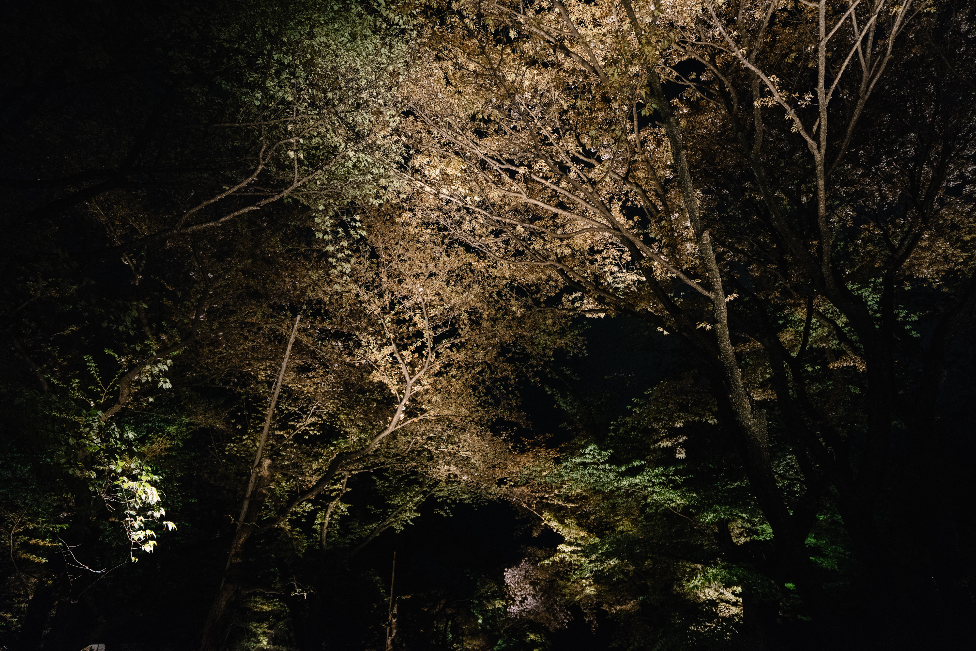 japan-nature06