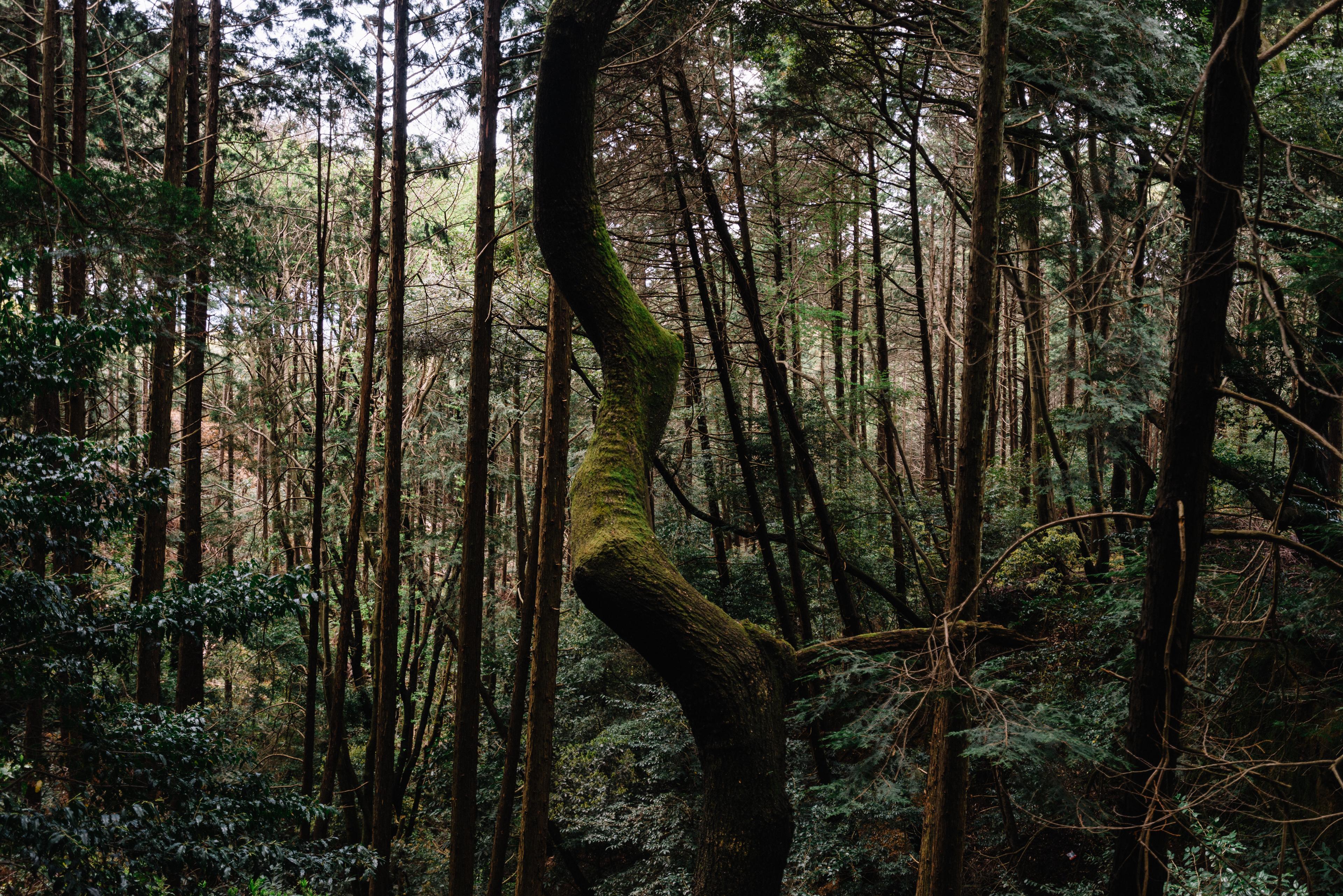 japan-nature09