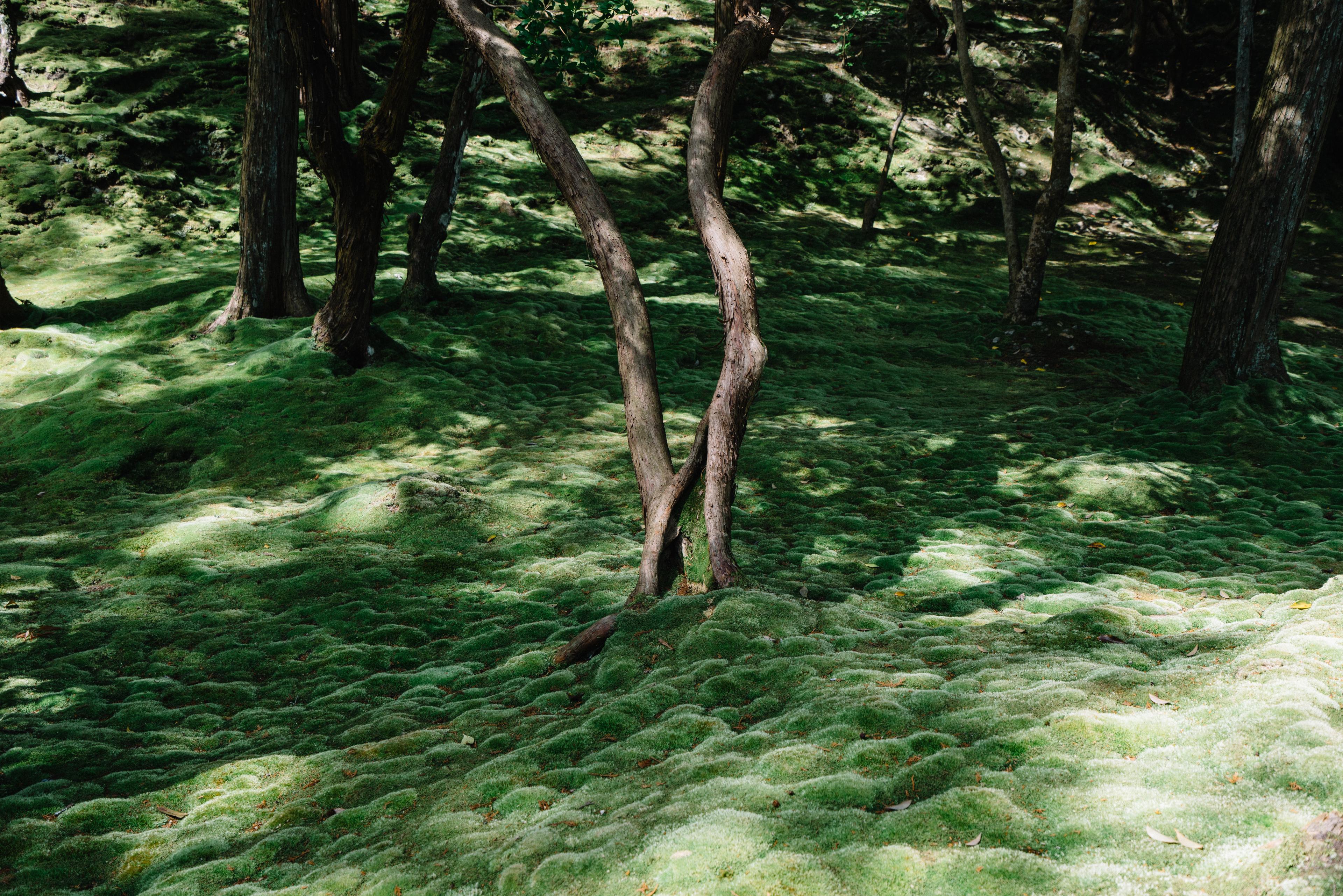 japan-nature10