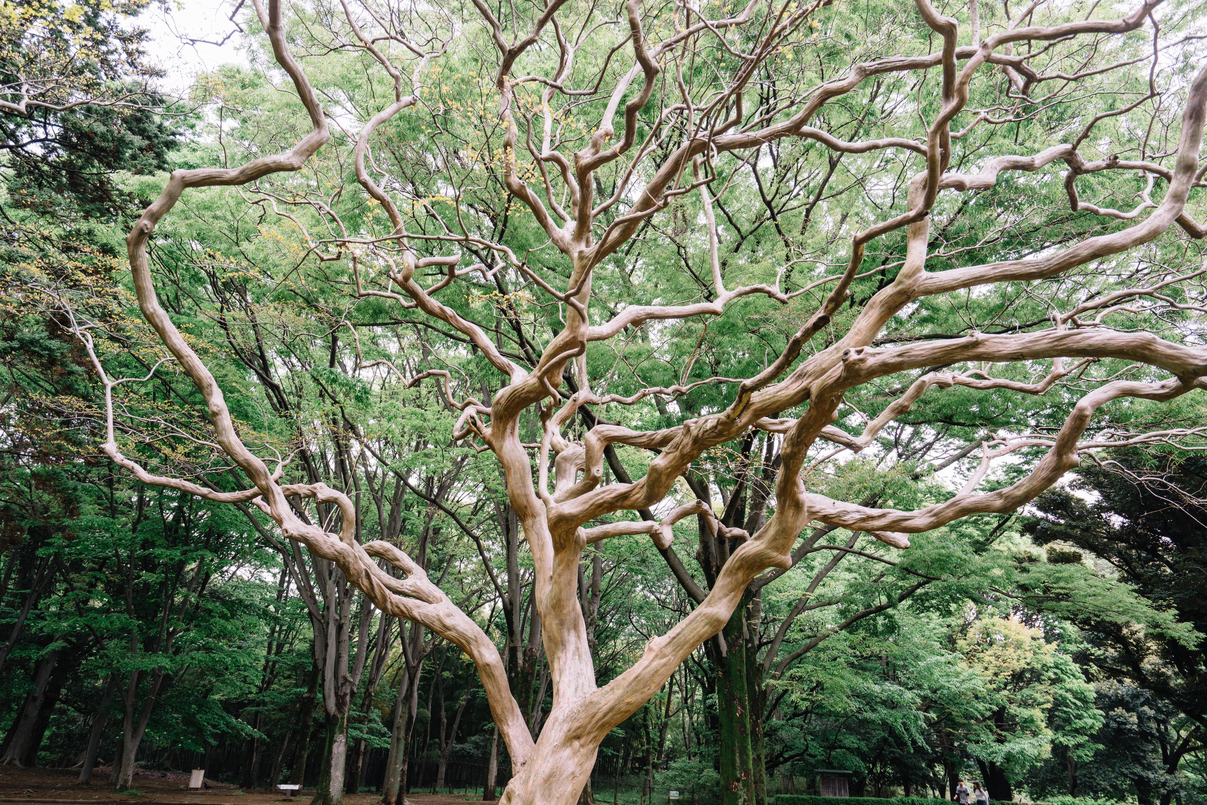 japan-nature11