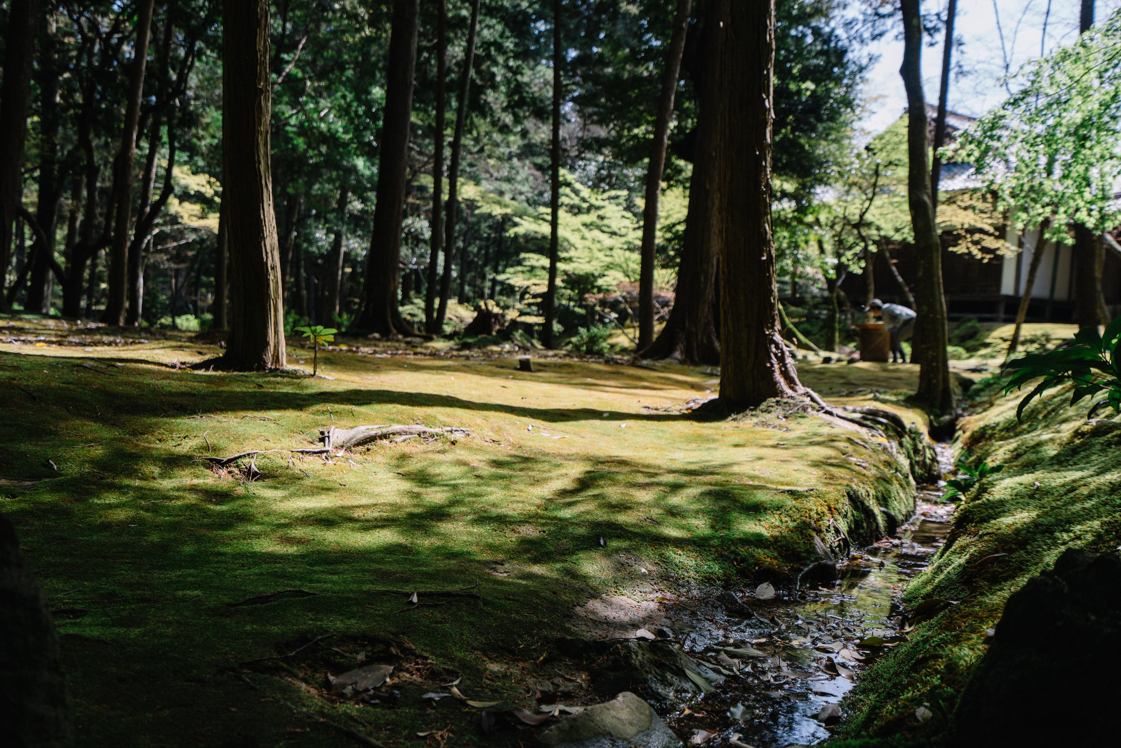 japan-nature14
