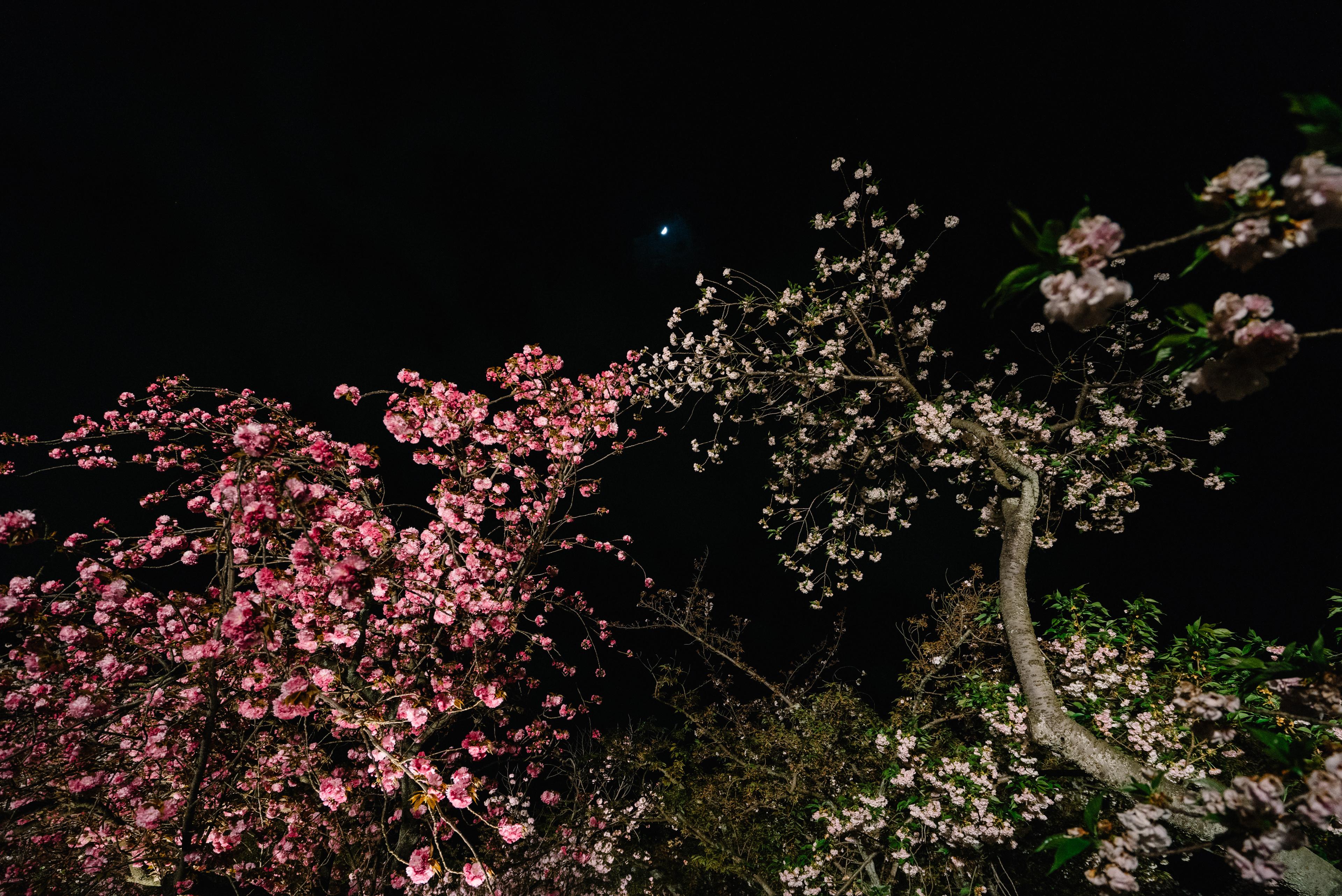 japan-nature19