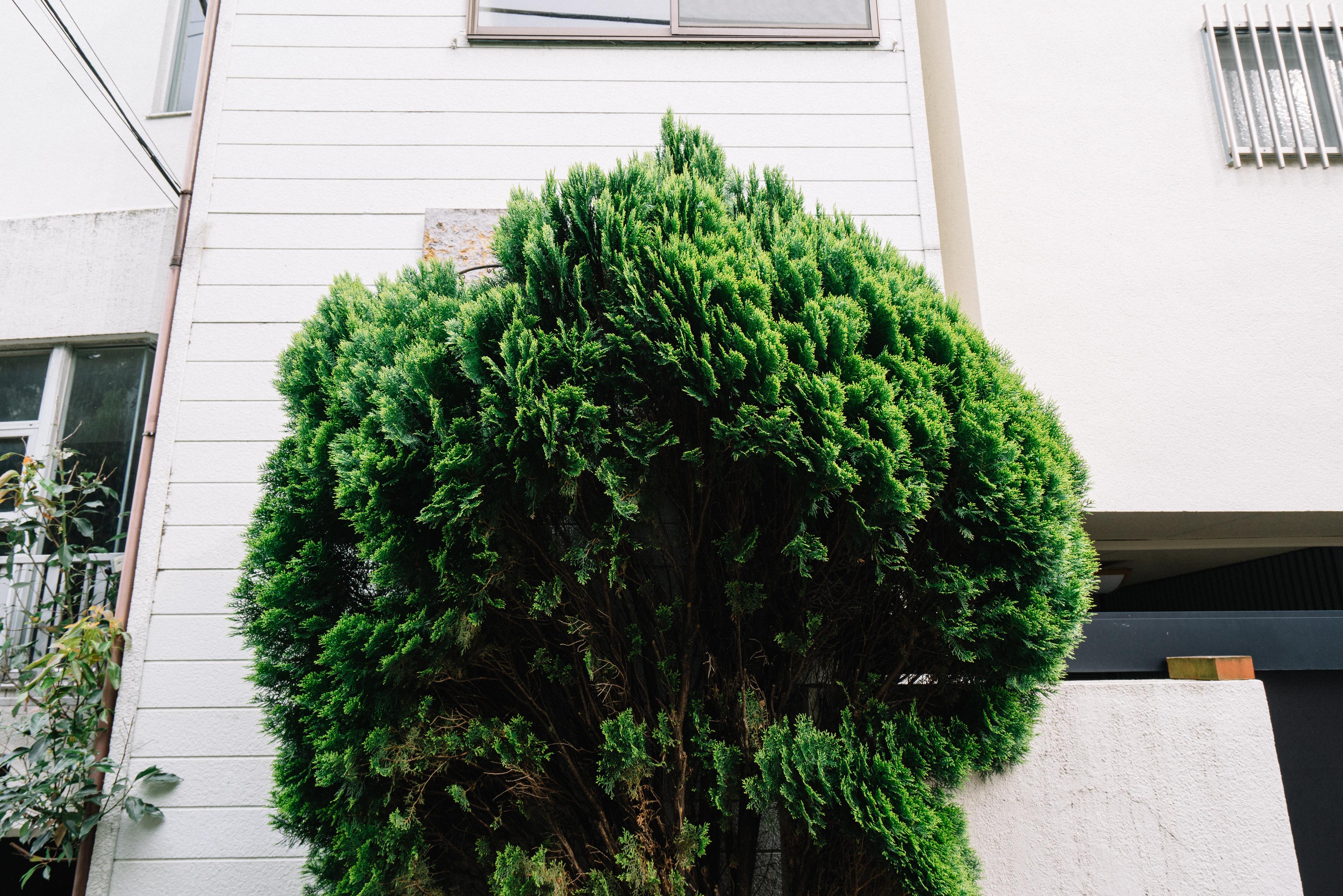 japan-nature24